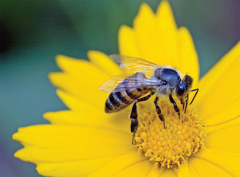 NASA Climate Kids :: A Bee is More than a Bug