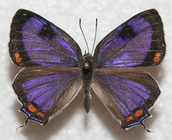 NASA Climate Kids :: Plant a butterfly garden!