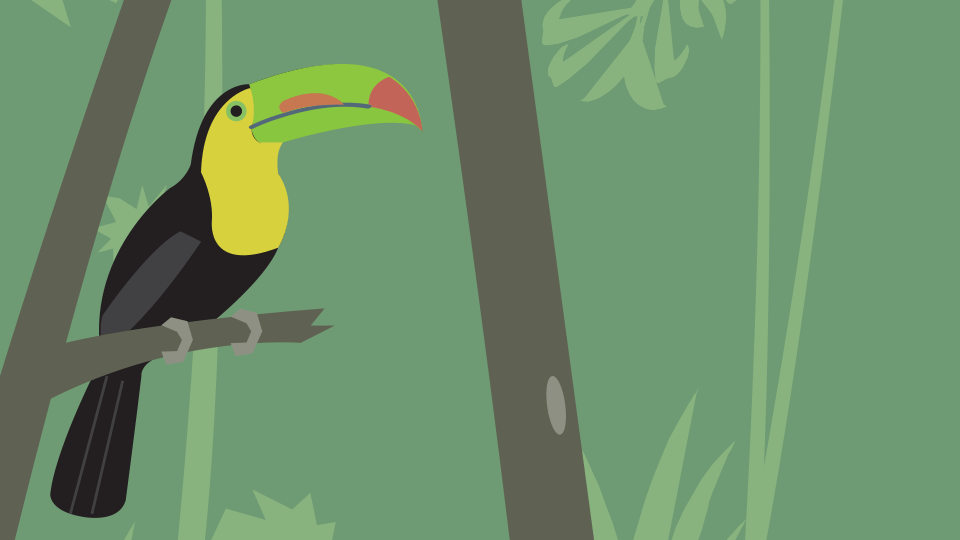 an illustration of a toucan bird in a jungle.