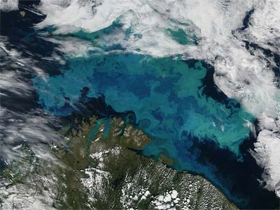 Phytoplankton bloom in Barents Sea, colorful satellite image.
