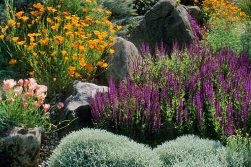 Garden with purple, orange and pink flowers, big rocks, and other plants.