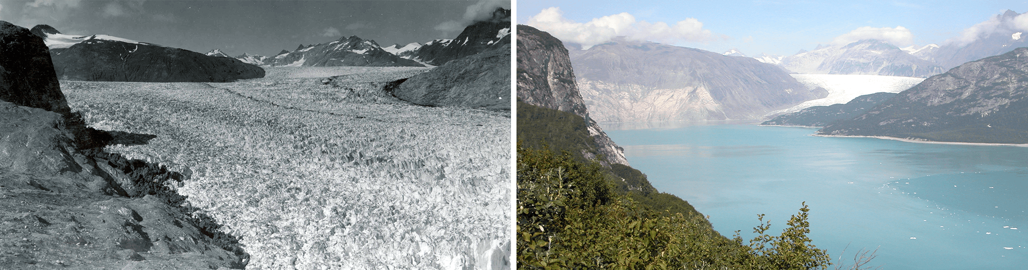 Alaska's Muir glacier in August 1941 and August 2004.