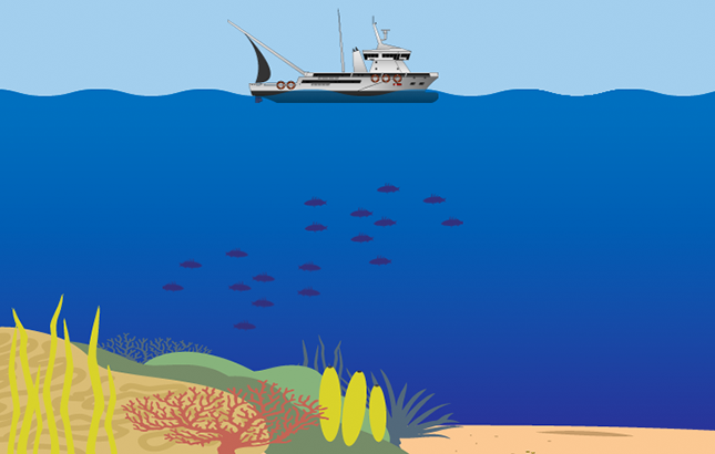 An illustrated coral reef.