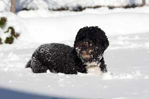 Photo of black dog half buried in snow.