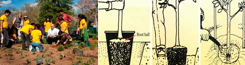 Two images. On left is a group of children planting a garden. On right is a series of three drawings showing how to plant a tree.