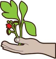 Cartoon hand holding soil and a little green plant.