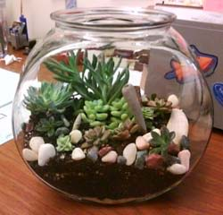 Photo of terrarium with succulent plants in a large, round fishbowl.