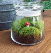 Make A Terrarium Mini Garden Nasa Climate Kids