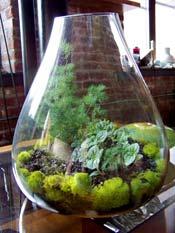 Make A Terrarium Mini Garden Nasa Climate Kids