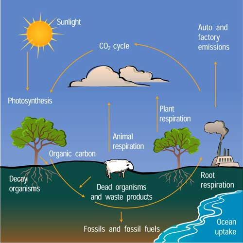 Diagram of Earth's carbon cycle.