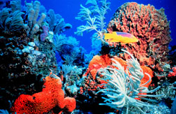 Colorful coral in sunny, shallow water, with fish.