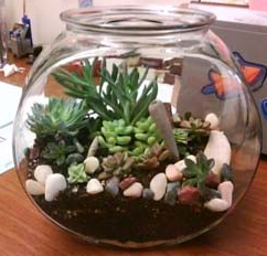photo of a terrarium.