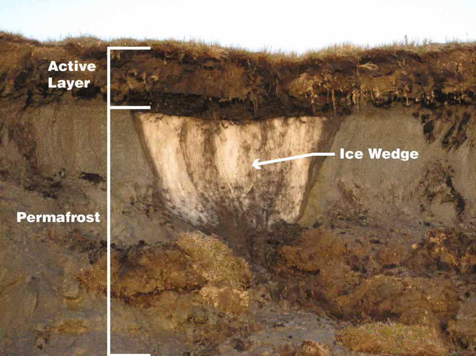 A labeled image of brown dirt and white ice layers in the soil to show the active layer and the permafrost, along with an ice wedge