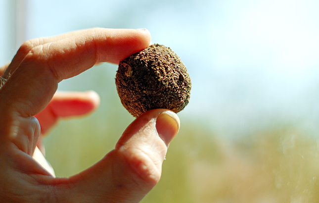 photo of a hand holding a seed ball.