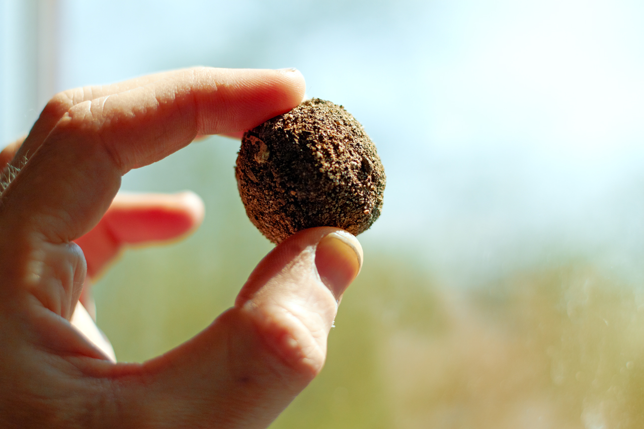 Photograph of finished seed balls.