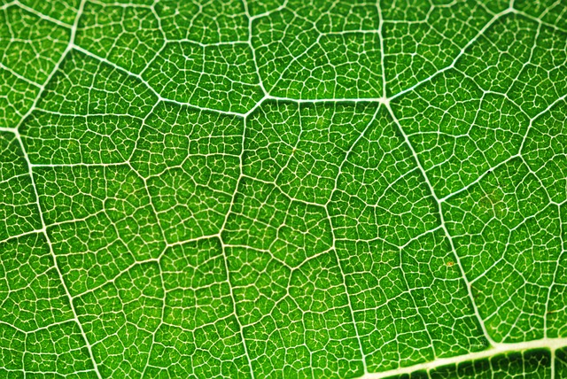 Stained Glass Leaf on Green Border