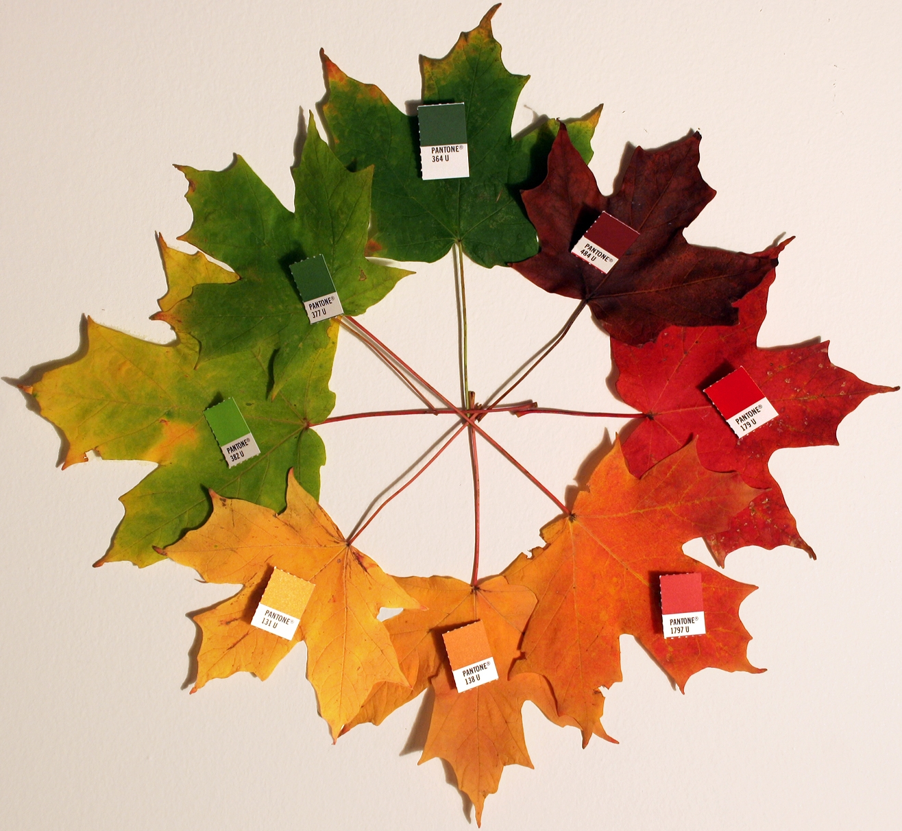 photo of leaves at diferent stages of changing color.