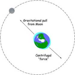 Diagram looking down on the North Pole of Earth, with the Moon in orbit. Ocean bulges with high tide on the side near the Moon and the opposite side. Arrow from Earth to Moon shows direction of Moon gravitational pull. Arrow pointing the opposite direction on the other side of Earth show direction of centrifugal force.